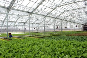 Brightfarms Greenhouse